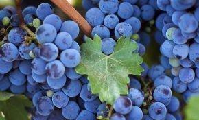 Сколько калорий в черном винограде?