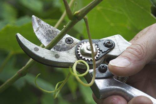 Чеканка листьев винограда