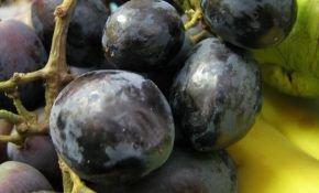 Полезные свойства черного винограда