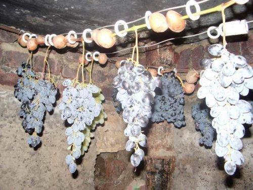 Виноград Дежнеева долго хранится