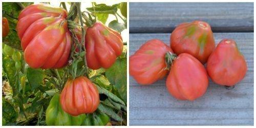 Грушевидные сорта томатов