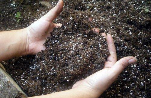 Качественная почва
