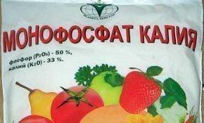 Монофосфат калия в выращивании томатов