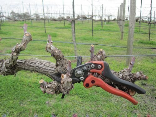 Обрезка винограда для новичков