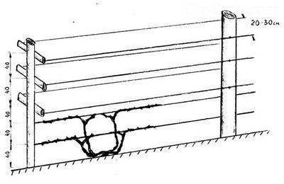 Одноплоскостная шпалера чертеж