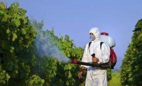 Сроки обработки виноградных кустов