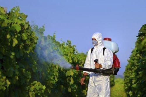 Опрыскивание листьев винограда