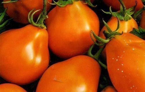 Груша оранжевая