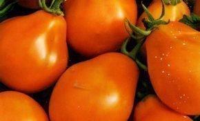 Грушевидные сорта томатов - описание