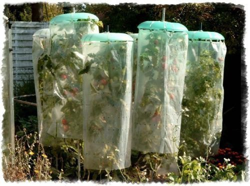Осенняя защита от заморозков