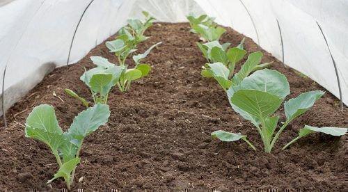 Молодые растения в теплице