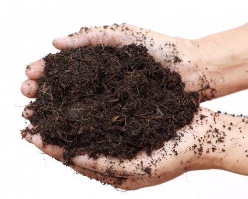 Почва для баклажанов