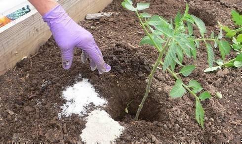 Удобрения томатов при посадке