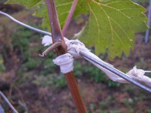 Подвязка подручными средствами