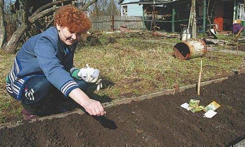 Посев кабачков