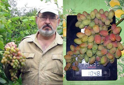 Размеры грозди