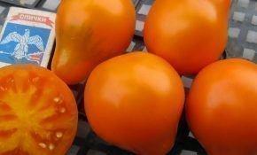 Характеристики сорта томата трюфель