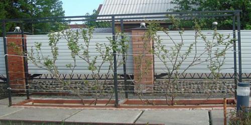 Шпалера для винограда из профильной трубы