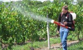 Средства для обработки винограда