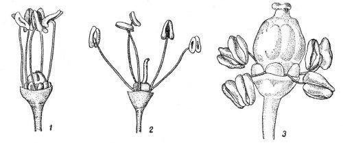 Типы цветов винограда