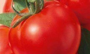 Характеристика и преимущества томатного сорта Москвич