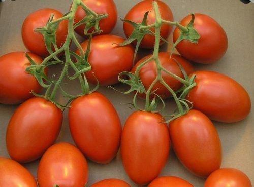 Кисть томата сливка
