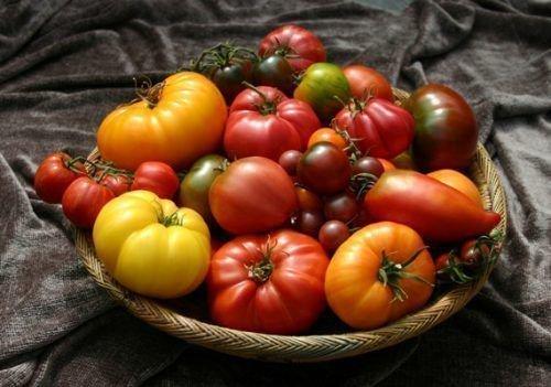 Различные виды помидор