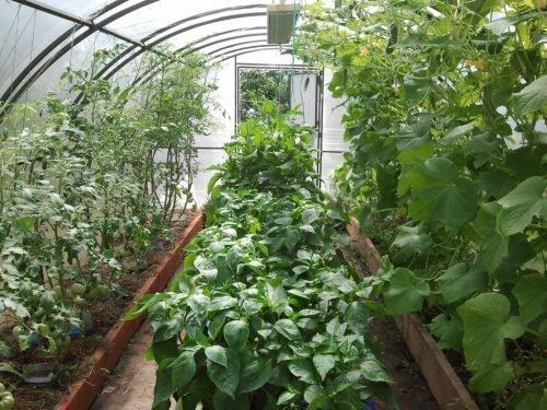 Томаты и другие овощи
