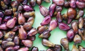 Вред и польза косточек винограда