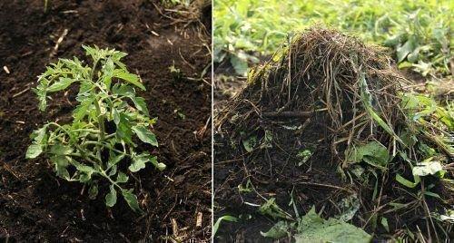 Заправка почвы компостом