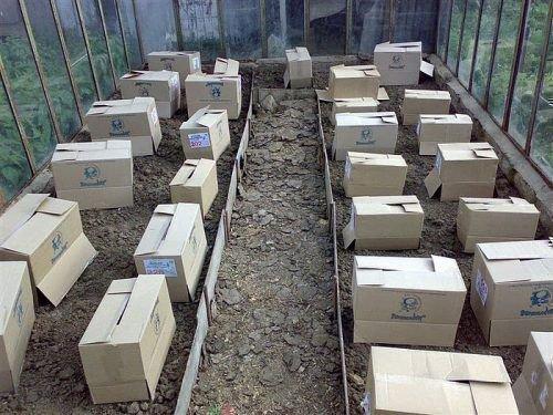 Защита в теплице коробками