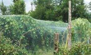 Защита для винограда с помощью специальной сетки
