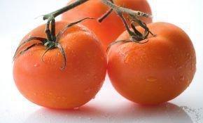Как выбрать сорт помидоров в Подмосковье
