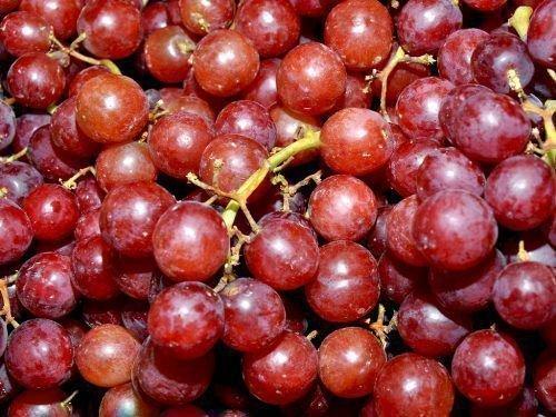 Виноград русский