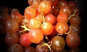 Ранние розовые сорта винограда