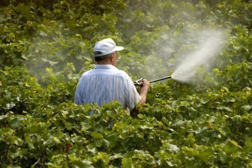 Обработка виноградника