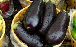Посадка и выращивание лучших сортов баклажанов в Сибири