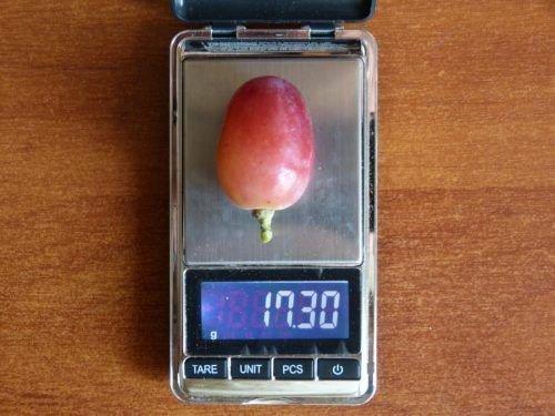 Вес ягоды сорта Подарок Ирине