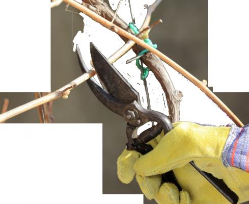 Прямая обрезка