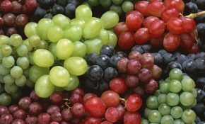 Что можно сказать о форме ягоды винограда