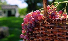Особенность виноградных сортов розового цвета