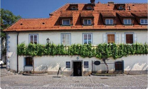 Самый старый виноград