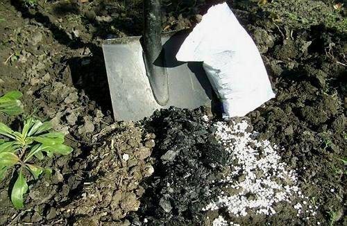 Заправка почвы