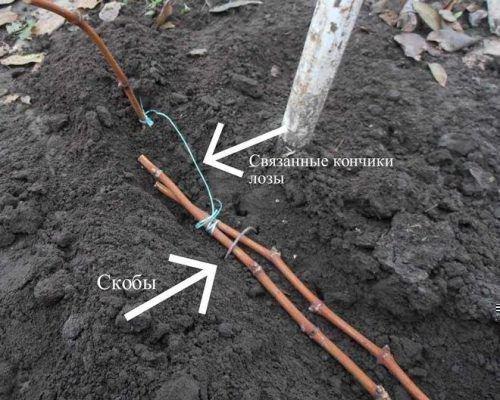 Укрытие почвой
