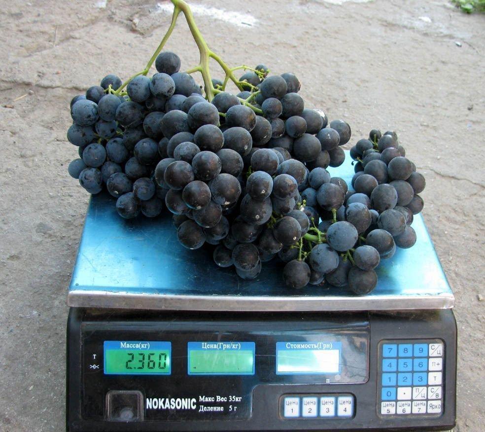 Вес средней грозди