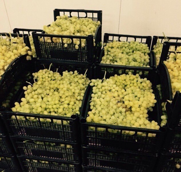 Виноград я ящиках
