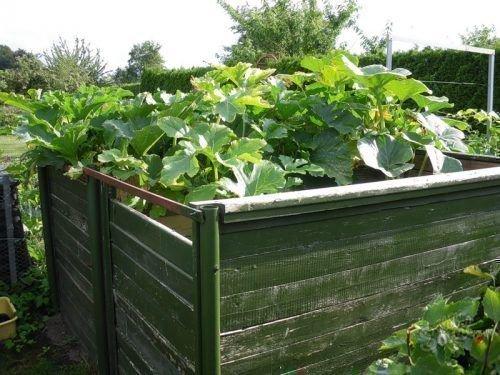 Выращивание на компостной куче