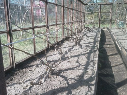 Заранее надо собрать урожай