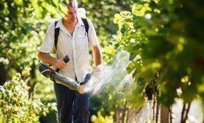 Описание обработки винограда в летний период