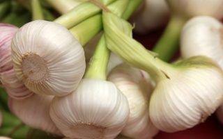 Чем полезен чеснок и какие витамины в нем есть